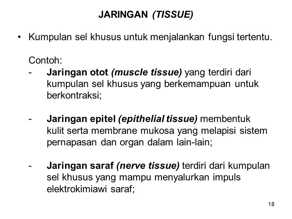JARINGAN (TISSUE) Kumpulan sel khusus untuk menjalankan fungsi tertentu. Contoh: - Jaringan otot (muscle tissue) yang terdiri dari.