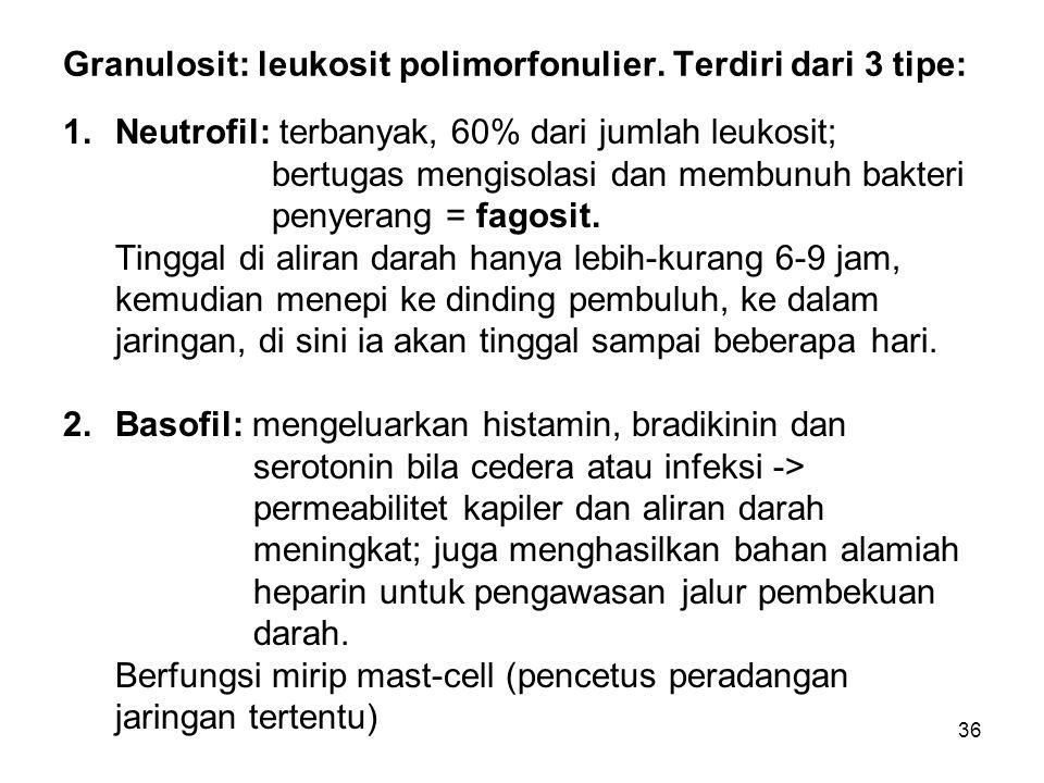 Granulosit: leukosit polimorfonulier. Terdiri dari 3 tipe: