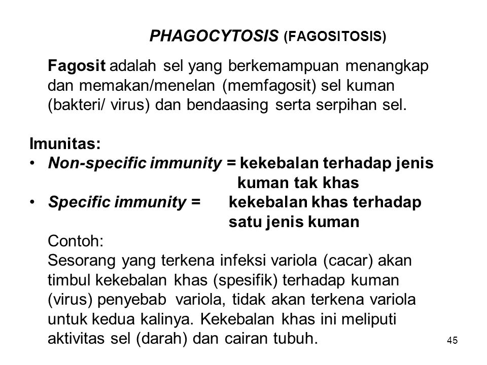 PHAGOCYTOSIS (FAGOSITOSIS)