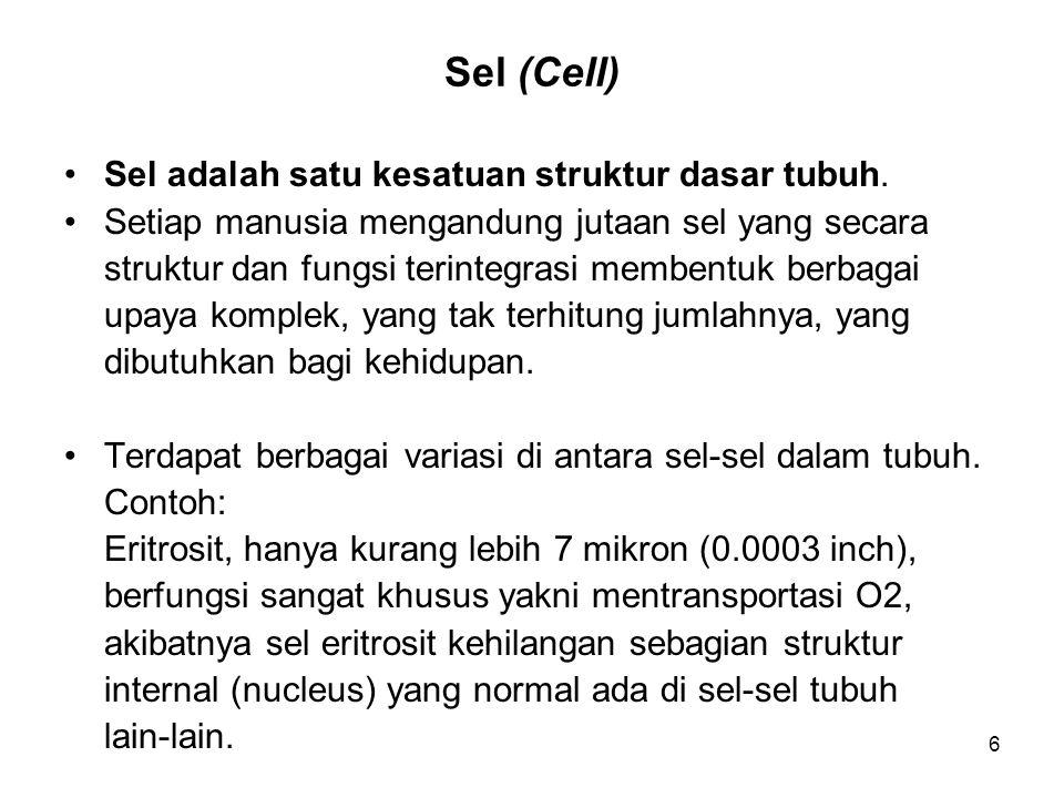 Sel (Cell) Sel adalah satu kesatuan struktur dasar tubuh.