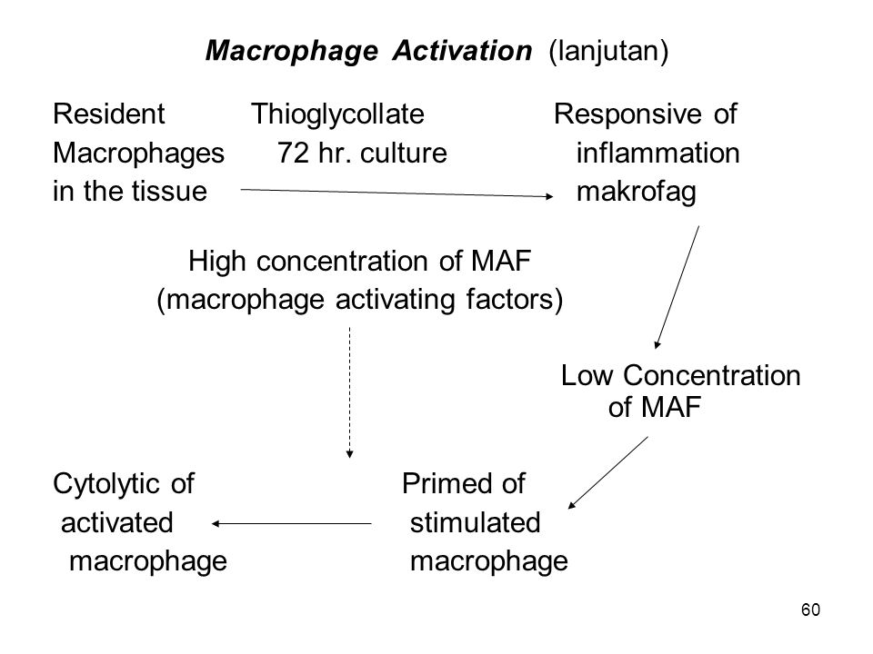 Macrophage Activation (lanjutan)