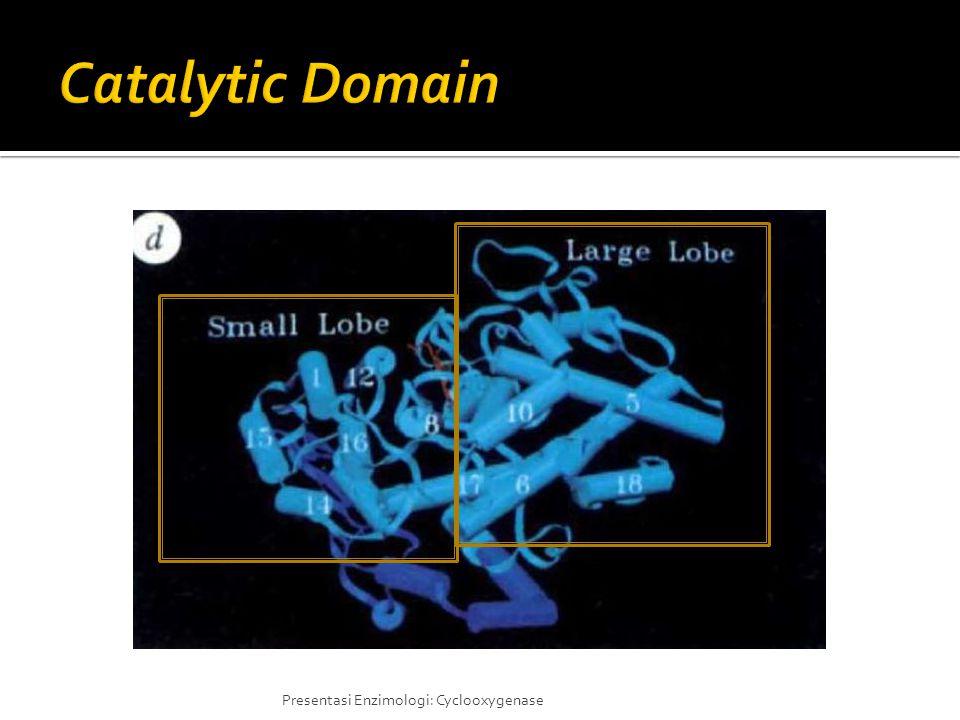Catalytic Domain Katalitik site itu ada 2 bagian lobe, yatu large lobe dan small lobe.