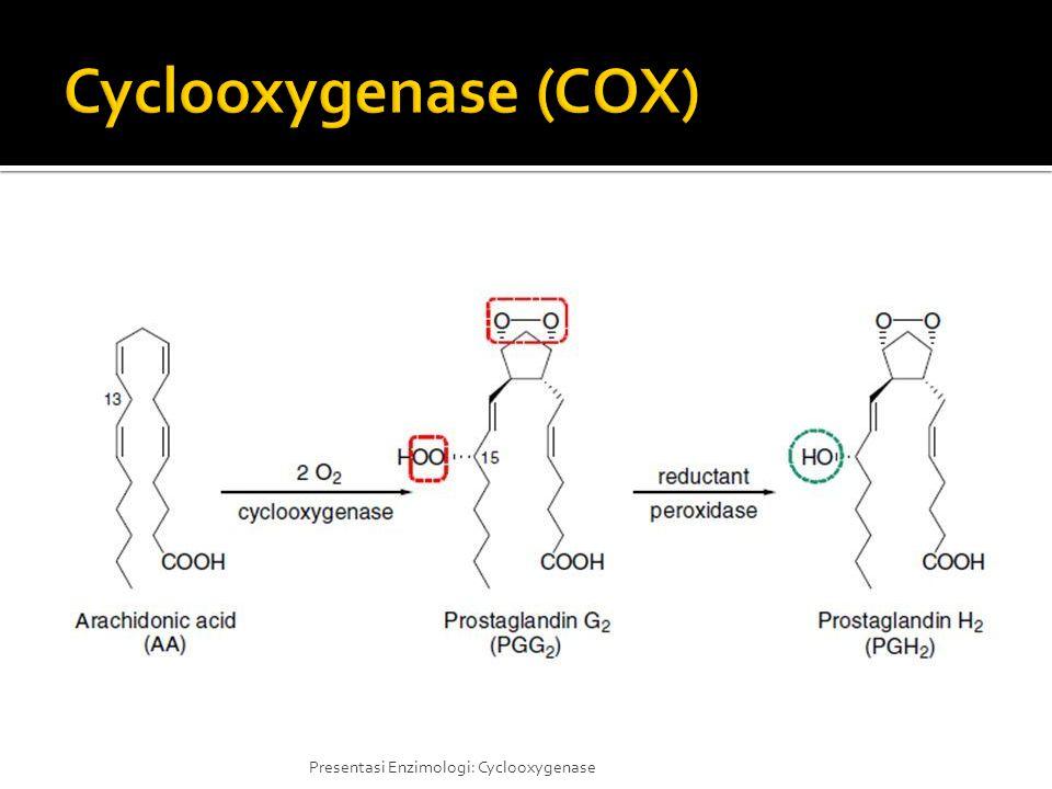 Cyclooxygenase (COX)