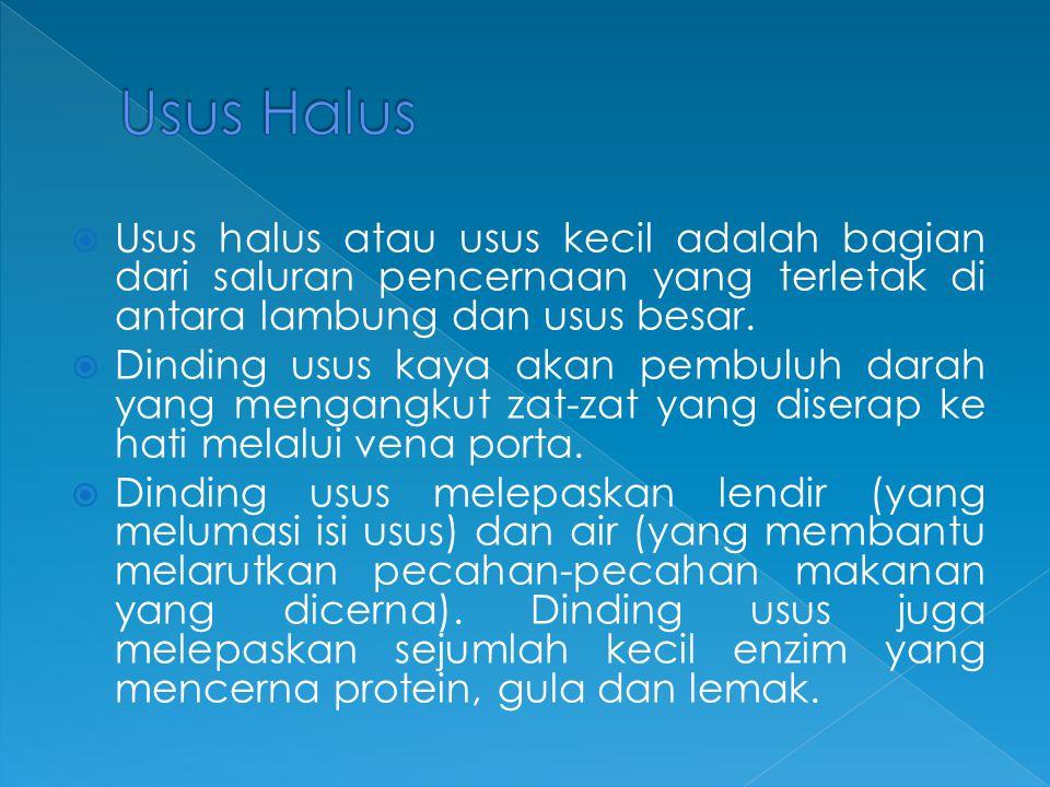 Usus Halus Usus halus atau usus kecil adalah bagian dari saluran pencernaan yang terletak di antara lambung dan usus besar.