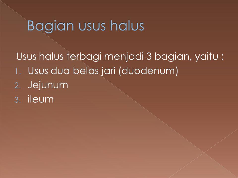Bagian usus halus Usus halus terbagi menjadi 3 bagian, yaitu :