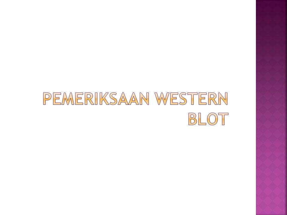 Pemeriksaan Western Blot