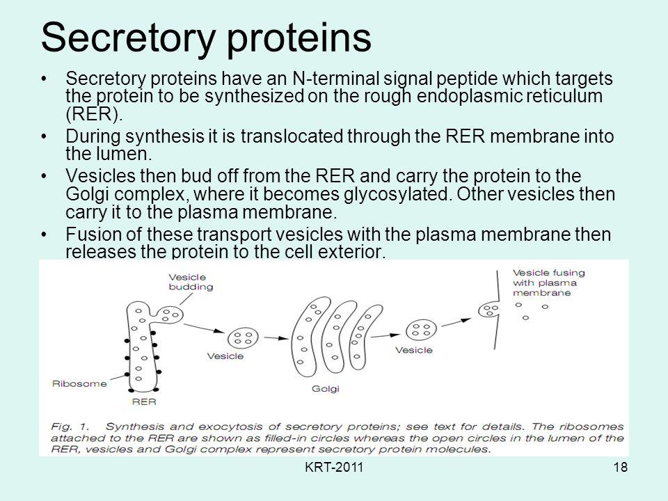 Secretory proteins