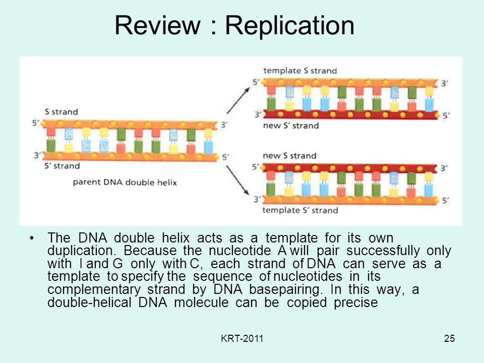 Review : Replication