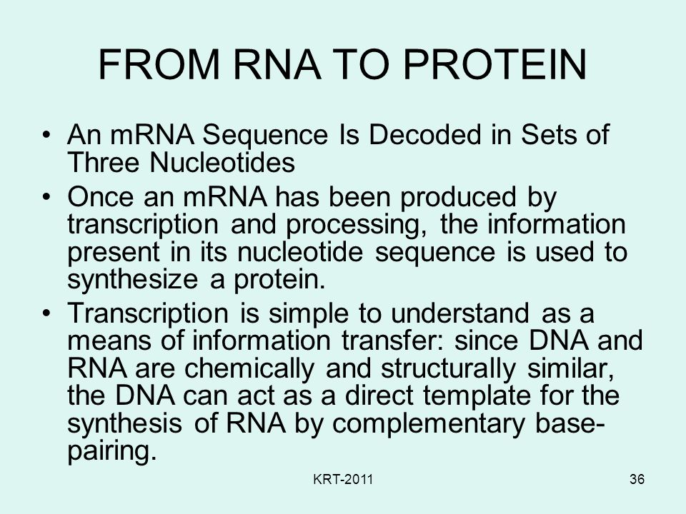 FROM RNA TO PROTEIN An mRNA Sequence Is Decoded in Sets of Three Nucleotides.