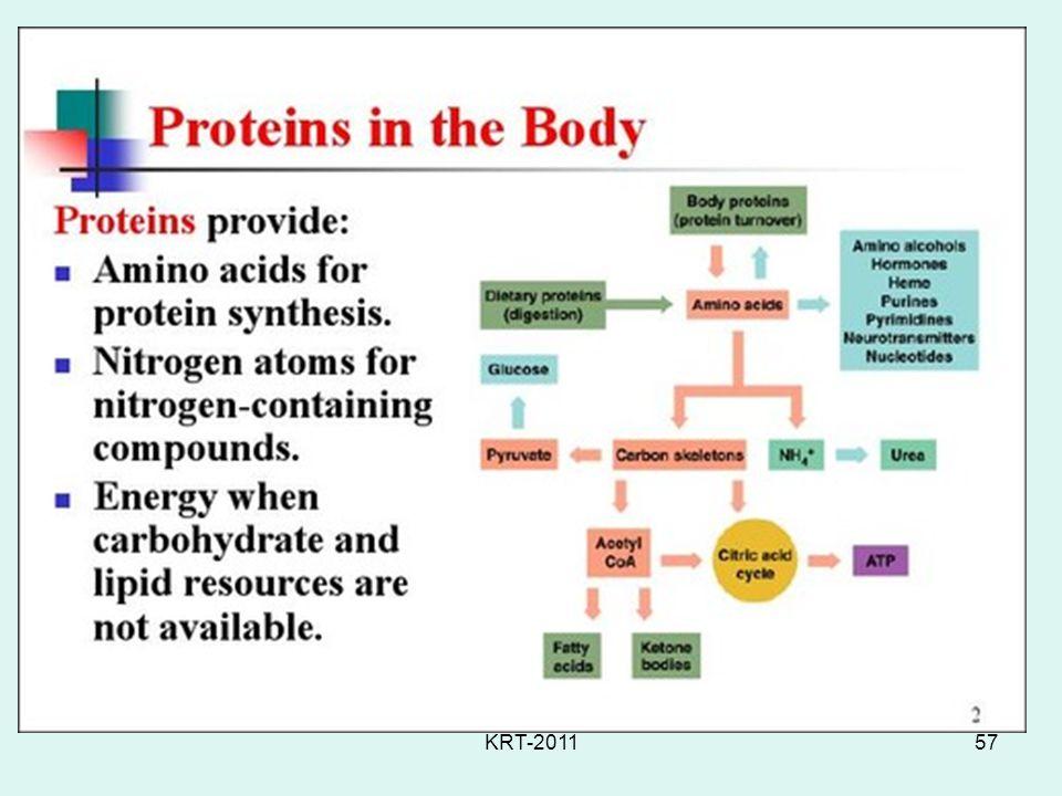 Protein Metabolism KRT-2011