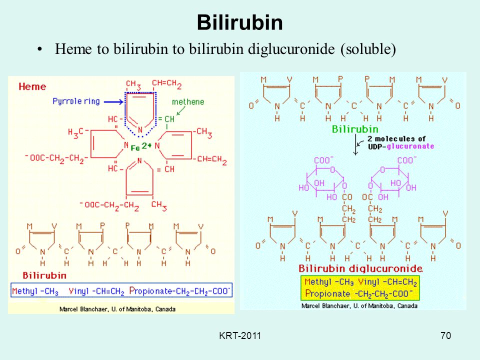 Bilirubin Heme to bilirubin to bilirubin diglucuronide (soluble)