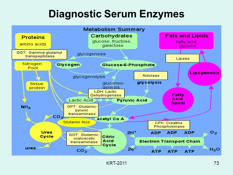 Diagnostic Serum Enzymes