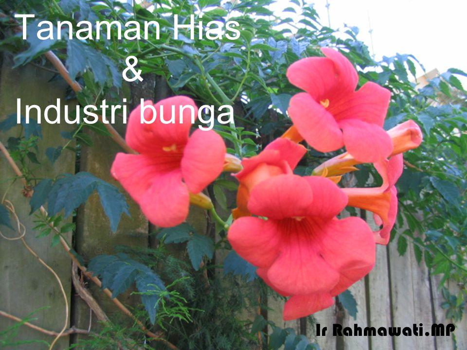 Tanaman Hias & Industri bunga