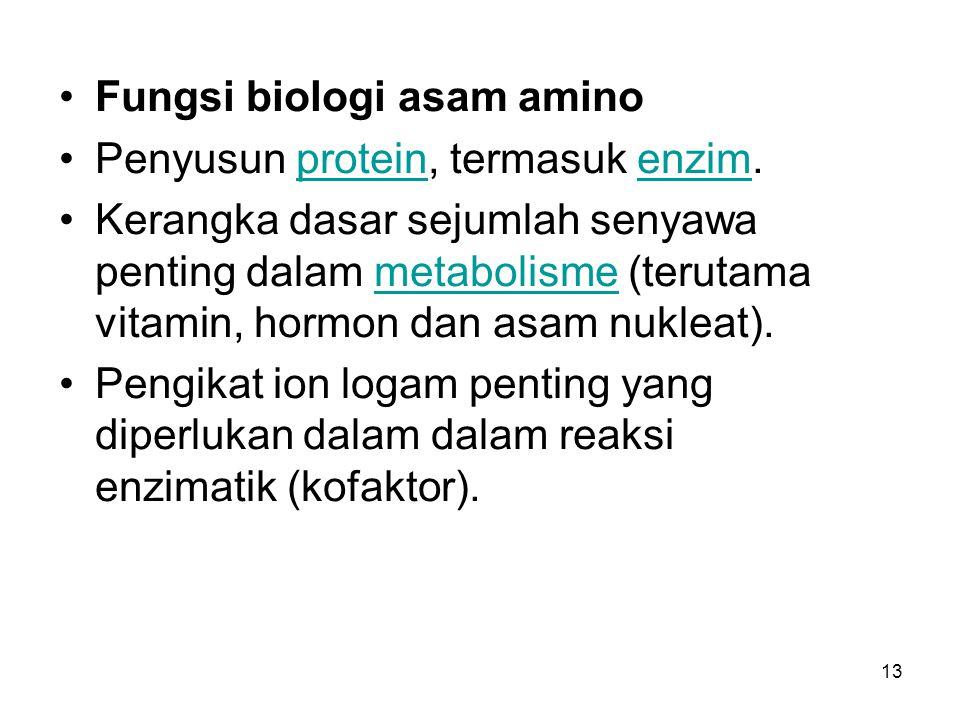 Fungsi biologi asam amino