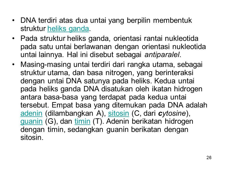 DNA terdiri atas dua untai yang berpilin membentuk struktur heliks ganda.