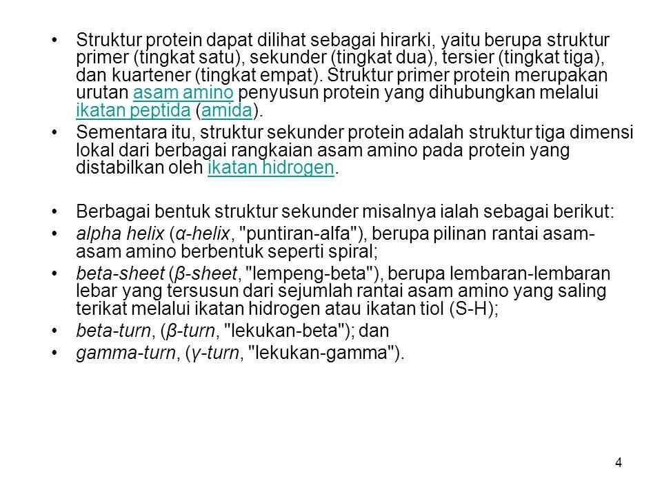 Struktur protein dapat dilihat sebagai hirarki, yaitu berupa struktur primer (tingkat satu), sekunder (tingkat dua), tersier (tingkat tiga), dan kuartener (tingkat empat). Struktur primer protein merupakan urutan asam amino penyusun protein yang dihubungkan melalui ikatan peptida (amida).