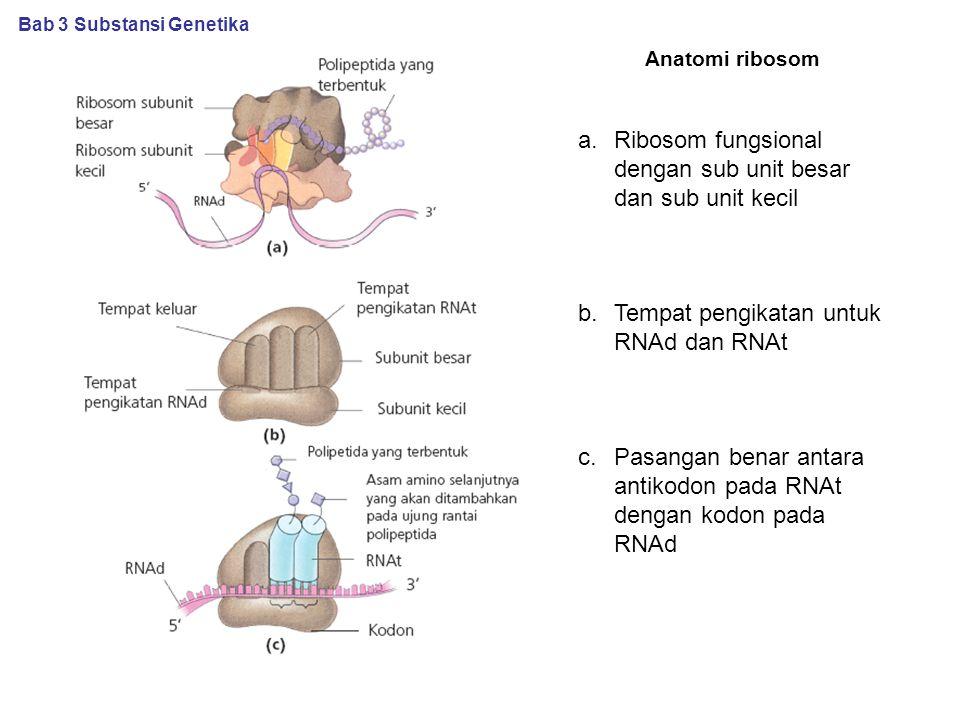 Ribosom fungsional dengan sub unit besar dan sub unit kecil