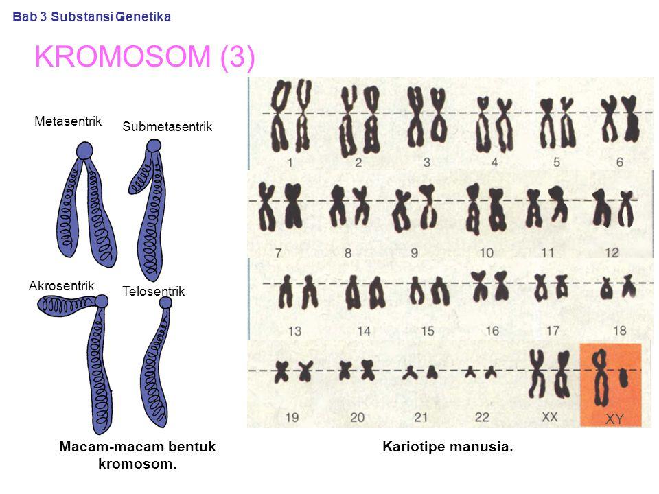 Macam-macam bentuk kromosom.