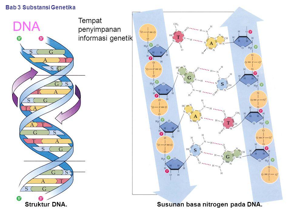 Susunan basa nitrogen pada DNA.