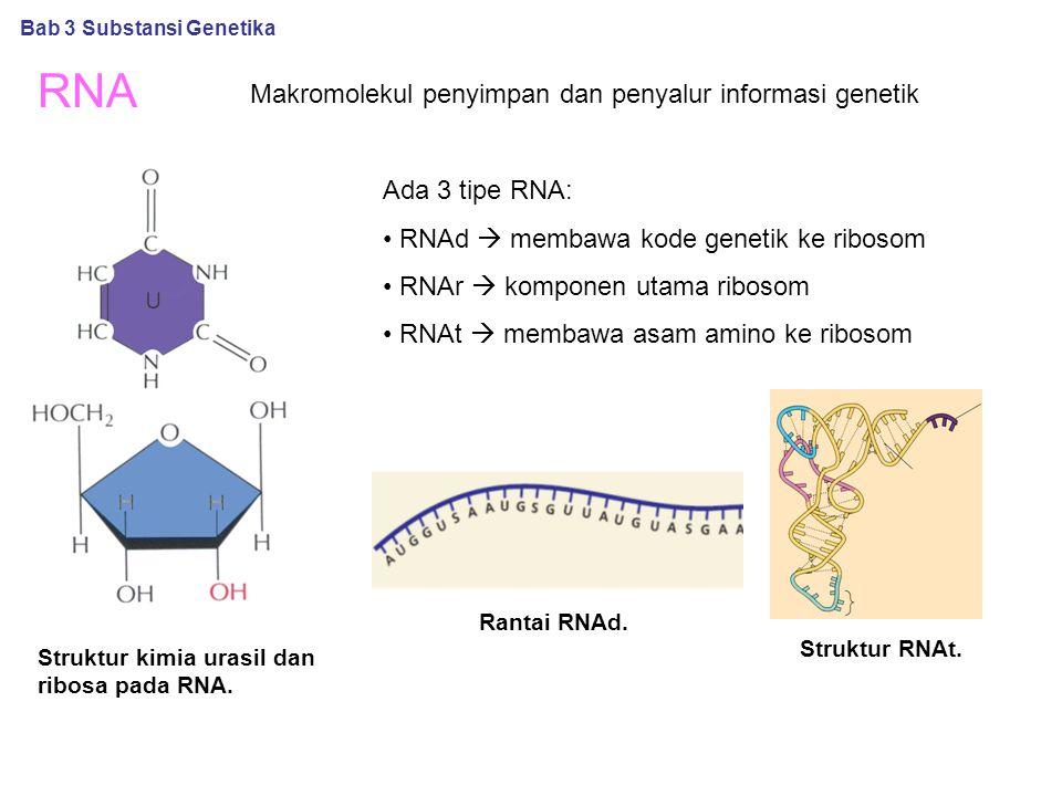 RNA Makromolekul penyimpan dan penyalur informasi genetik