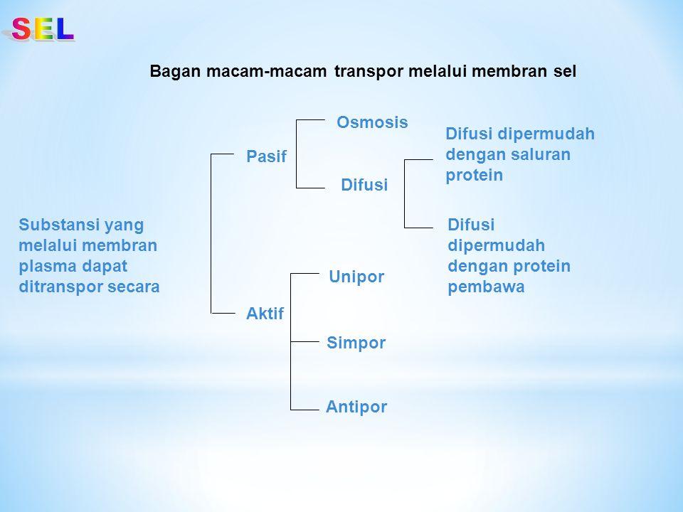 SEL Bagan macam-macam transpor melalui membran sel Osmosis
