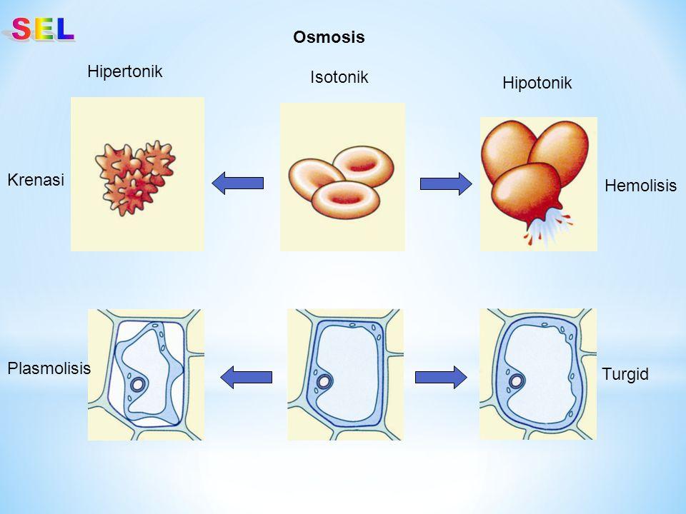 SEL Osmosis Hipertonik Isotonik Hipotonik Krenasi Hemolisis