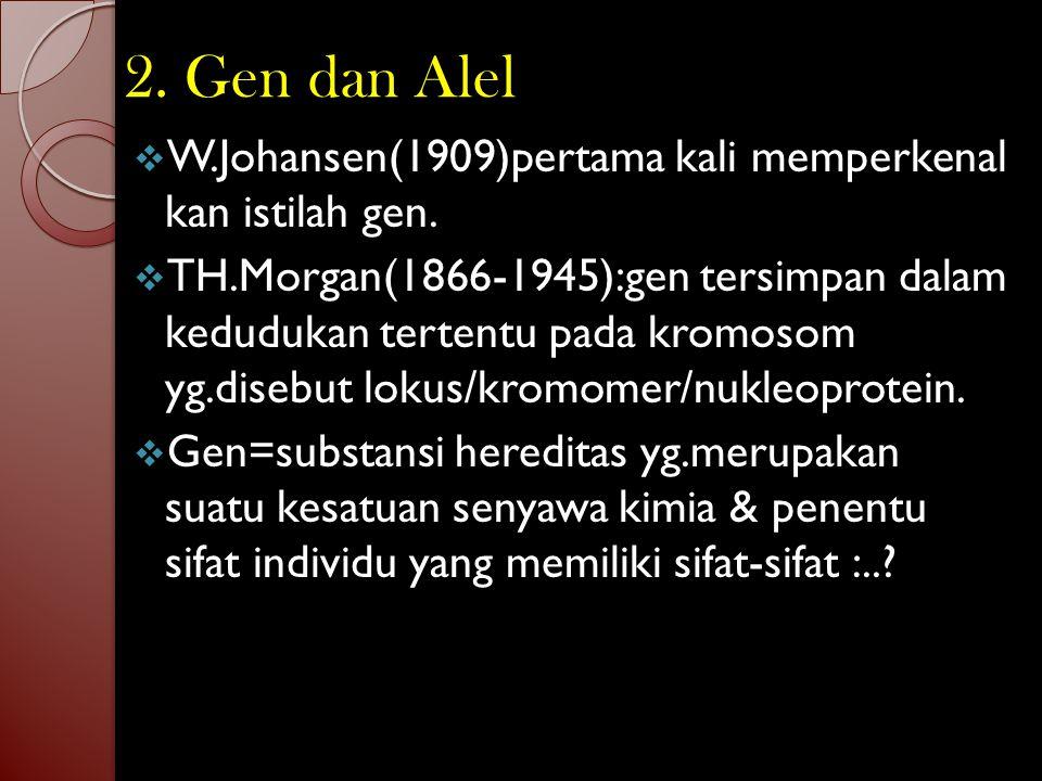 2. Gen dan Alel W.Johansen(1909)pertama kali memperkenal kan istilah gen.