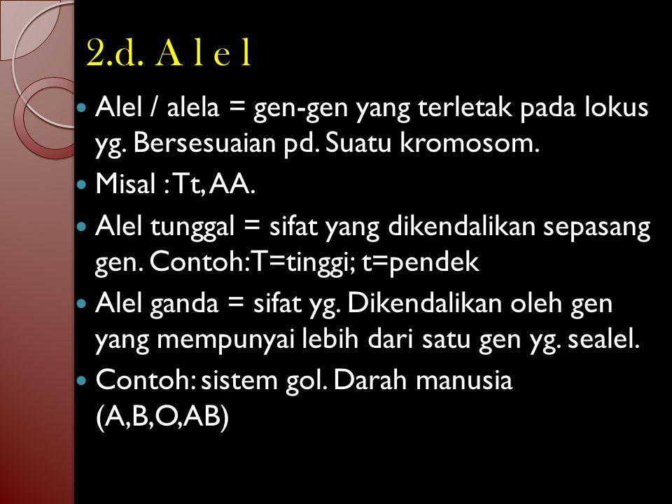 2.d. A l e l Alel / alela = gen-gen yang terletak pada lokus yg. Bersesuaian pd. Suatu kromosom. Misal : Tt, AA.