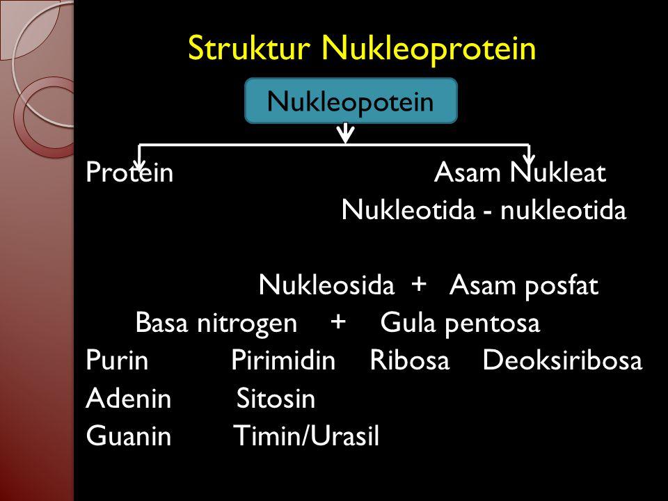 Struktur Nukleoprotein