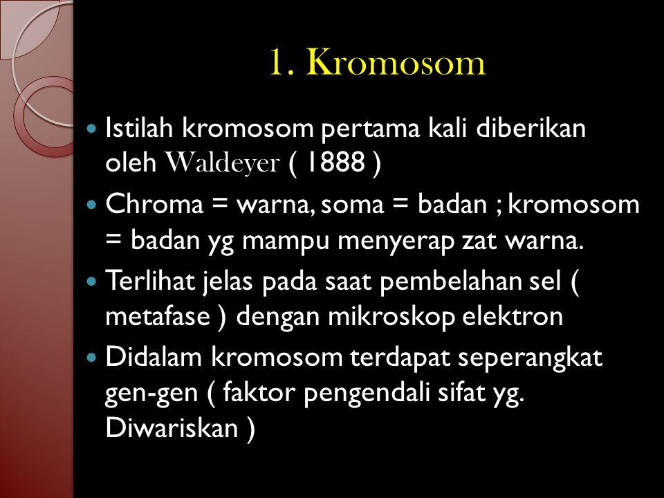 1. Kromosom Istilah kromosom pertama kali diberikan oleh Waldeyer ( 1888 )