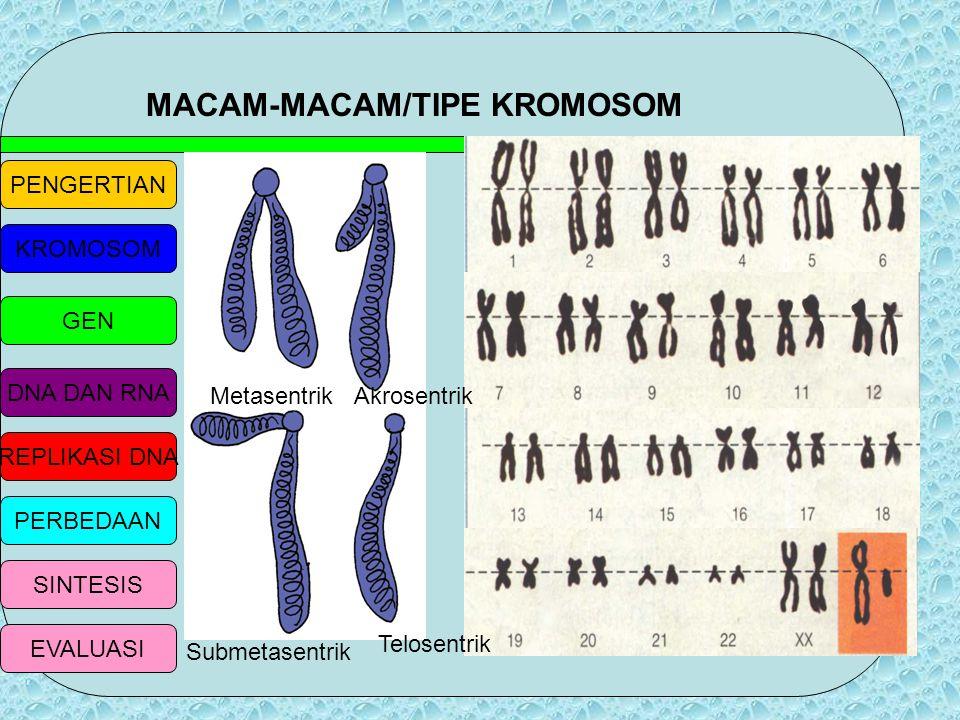 MACAM-MACAM/TIPE KROMOSOM
