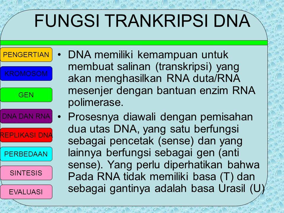 FUNGSI TRANKRIPSI DNA