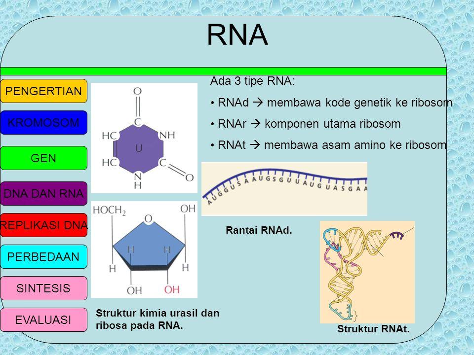 RNA Ada 3 tipe RNA: RNAd  membawa kode genetik ke ribosom