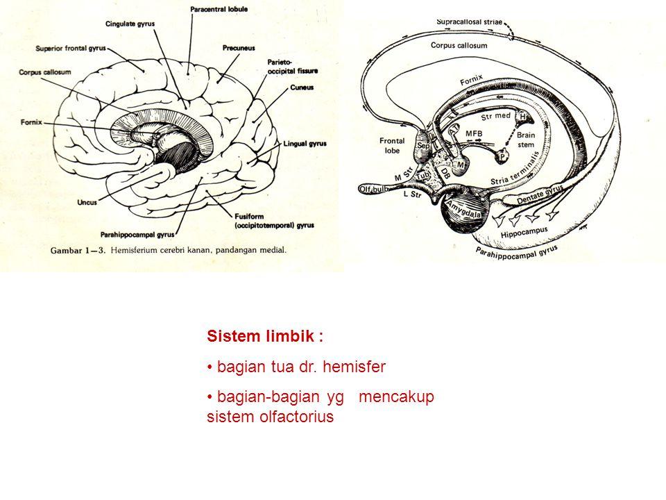 Sistem limbik : bagian tua dr. hemisfer bagian-bagian yg mencakup sistem olfactorius