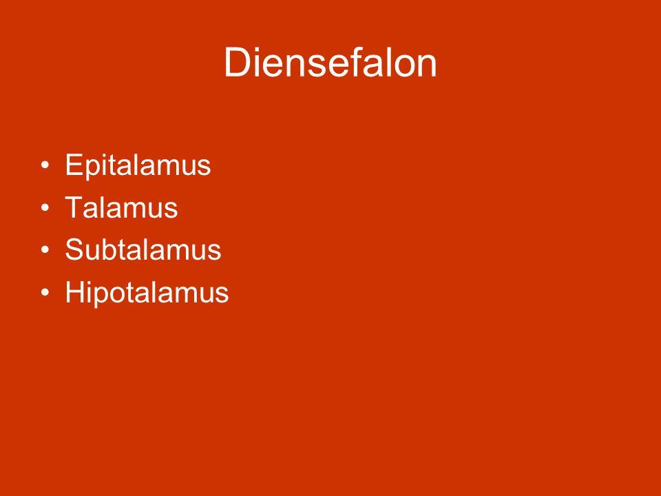Diensefalon Epitalamus Talamus Subtalamus Hipotalamus