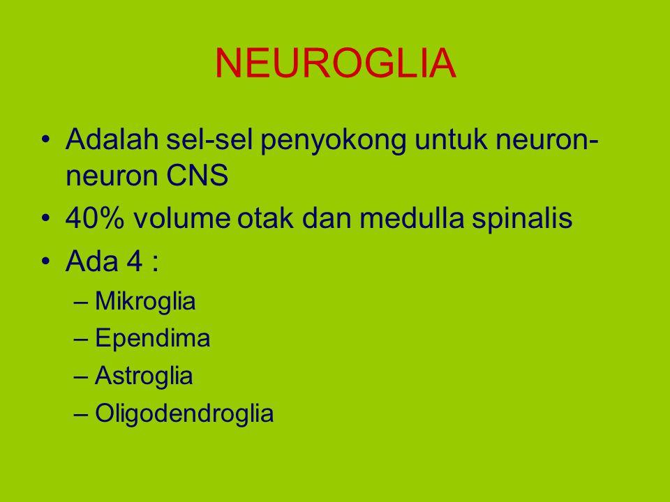 NEUROGLIA Adalah sel-sel penyokong untuk neuron-neuron CNS