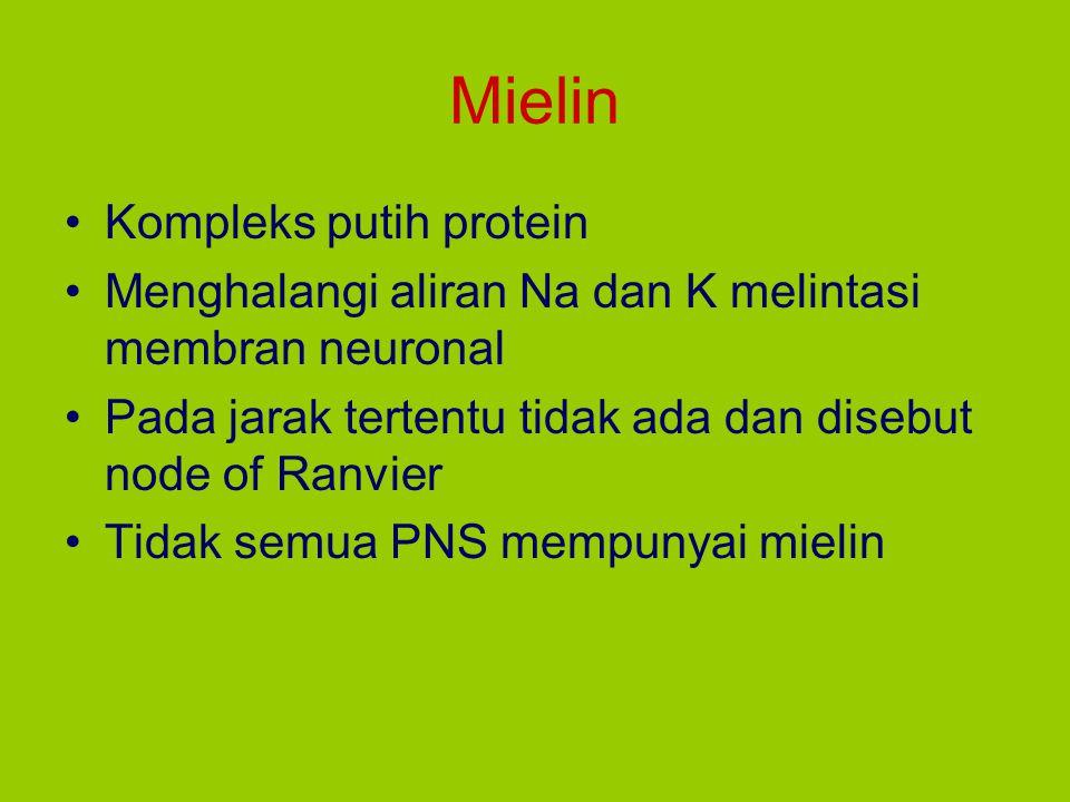Mielin Kompleks putih protein