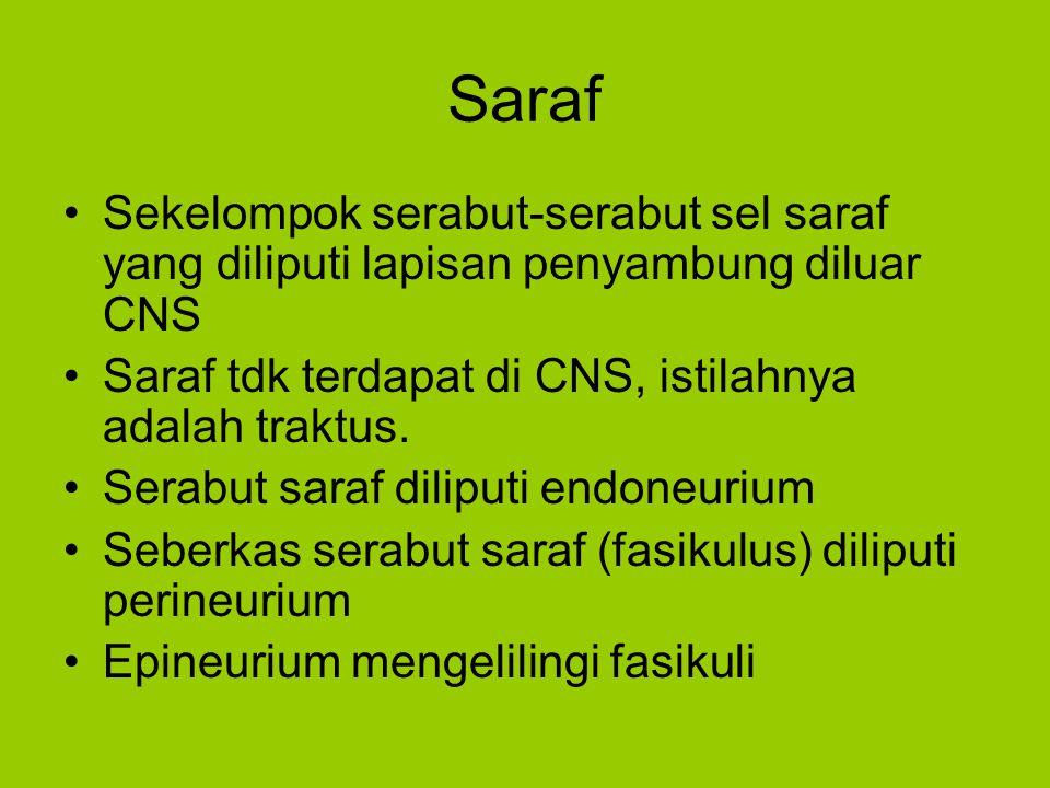 Saraf Sekelompok serabut-serabut sel saraf yang diliputi lapisan penyambung diluar CNS. Saraf tdk terdapat di CNS, istilahnya adalah traktus.