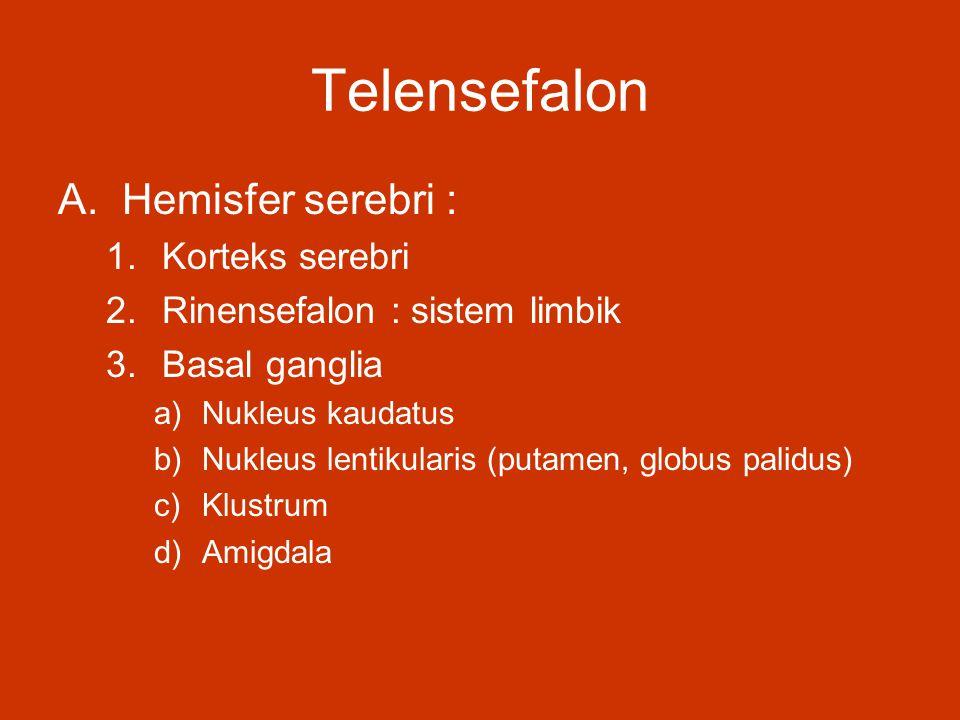 Telensefalon Hemisfer serebri : Korteks serebri