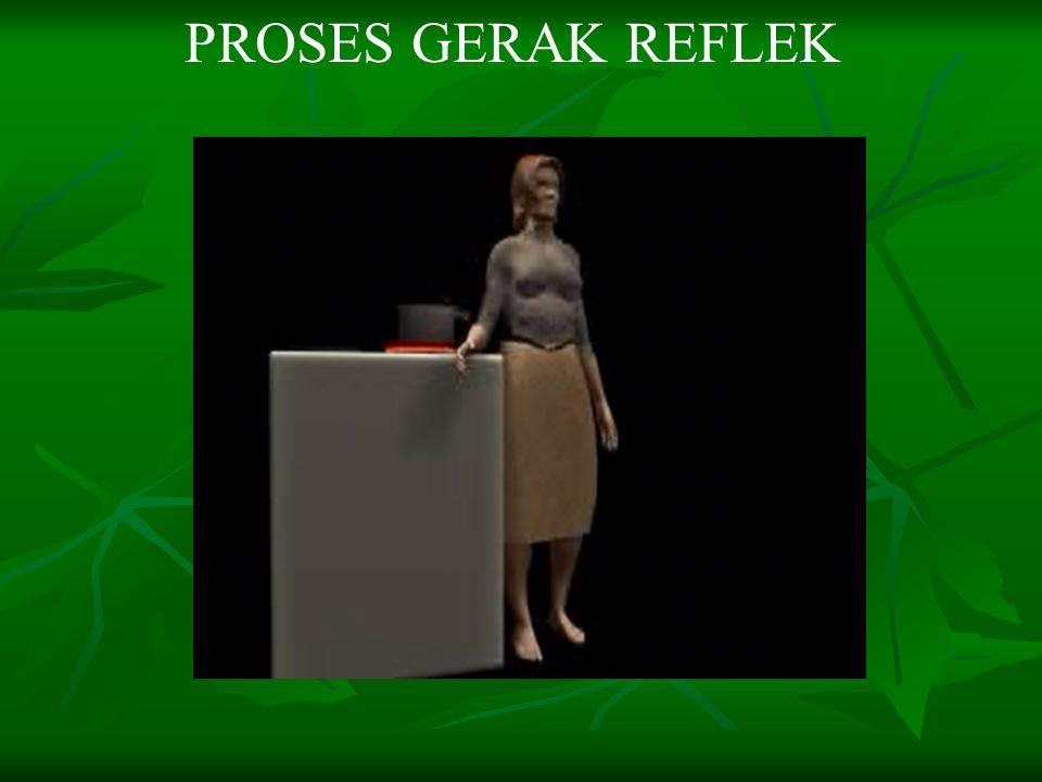PROSES GERAK REFLEK