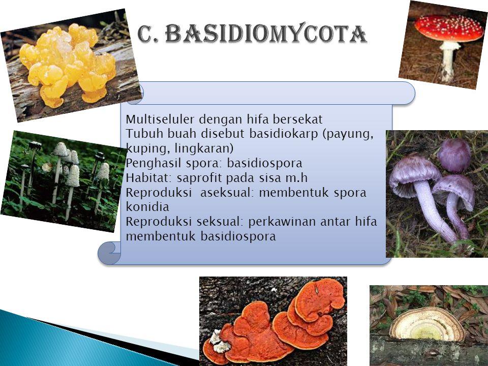 c. BASIDIOMYCOTA Multiseluler dengan hifa bersekat