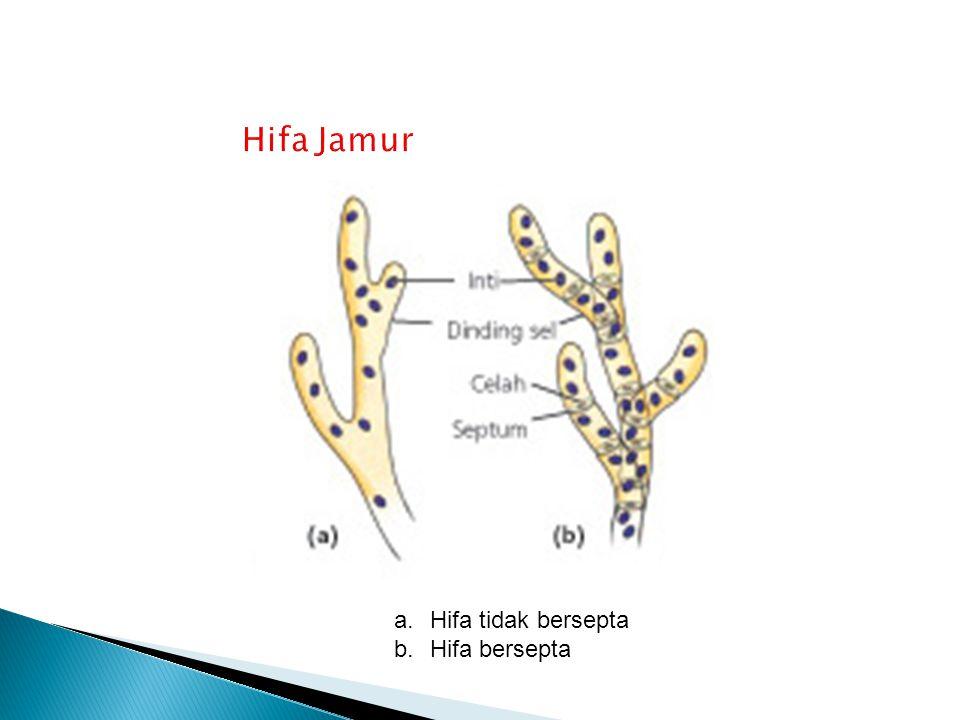 Hifa Jamur Hifa tidak bersepta Hifa bersepta