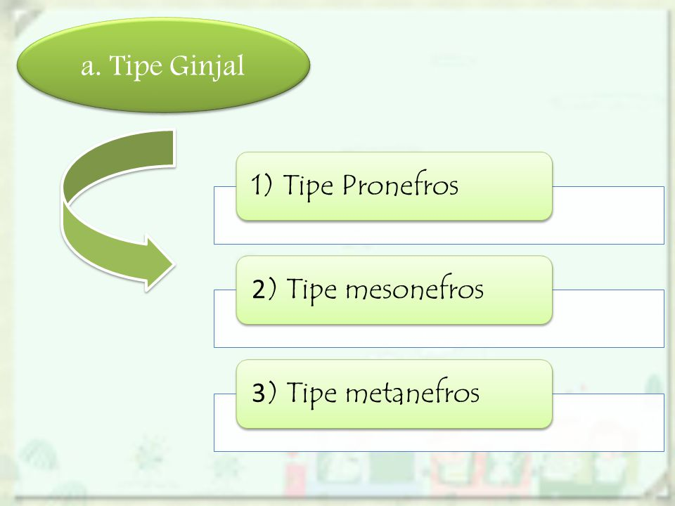 a. Tipe Ginjal 1) Tipe Pronefros 2) Tipe mesonefros 3) Tipe metanefros
