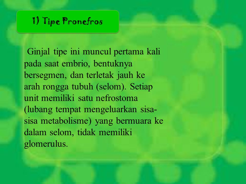 1) Tipe Pronefros