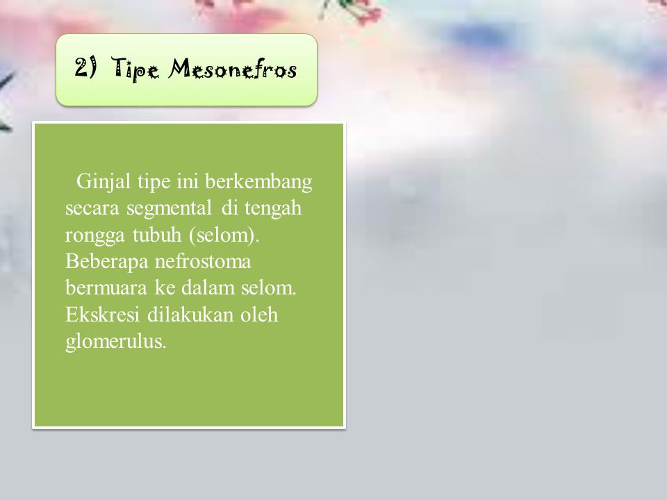2) Tipe Mesonefros