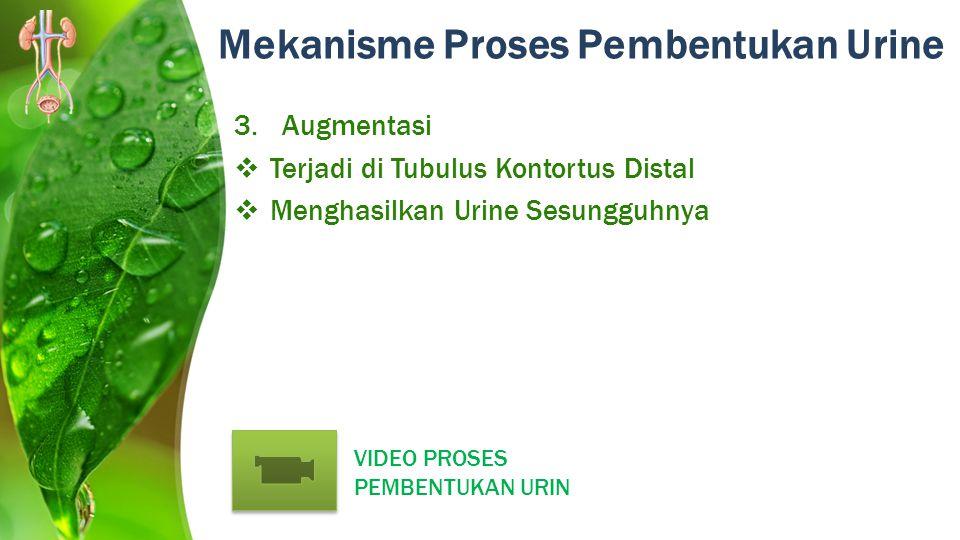 Mekanisme Proses Pembentukan Urine