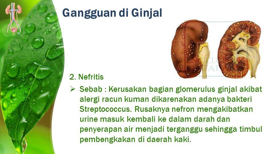 Gangguan di Ginjal 2. Nefritis