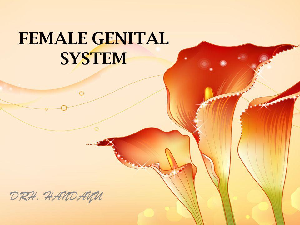 FEMALE GENITAL SYSTEM DRH. HANDAYU