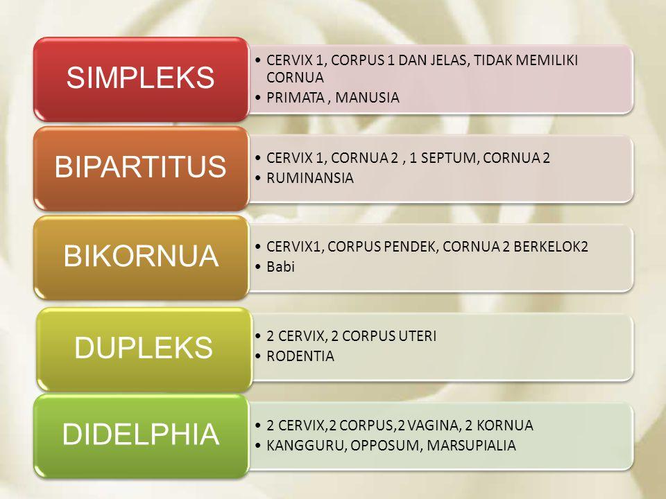 SIMPLEKS CERVIX 1, CORPUS 1 DAN JELAS, TIDAK MEMILIKI CORNUA. PRIMATA , MANUSIA. BIPARTITUS. CERVIX 1, CORNUA 2 , 1 SEPTUM, CORNUA 2.