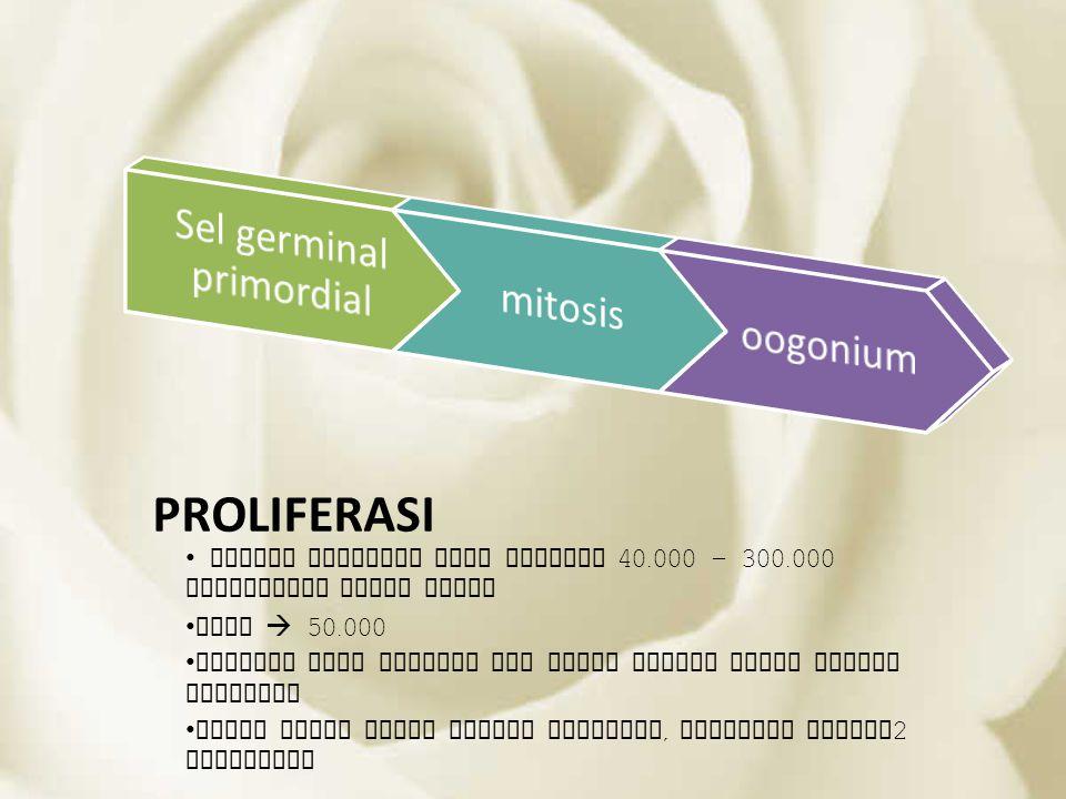 Sel germinal primordial